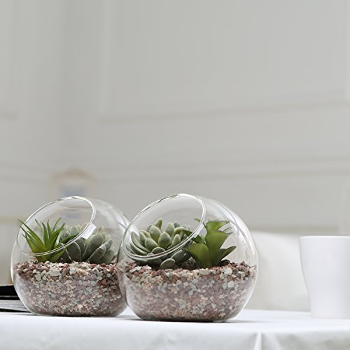 6 Inch Glass Ball Terrarium Tabletop Air Plant Display Globe Set
