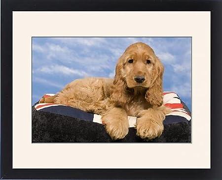 Con Marco Artwork de perro - Cocker Spaniel inglés - puppy. de perro cama: Amazon.es: Hogar