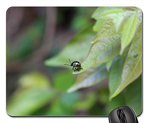 Mouse Pad - Bug Leaf Nature Green Insect Garden Pest Plant
