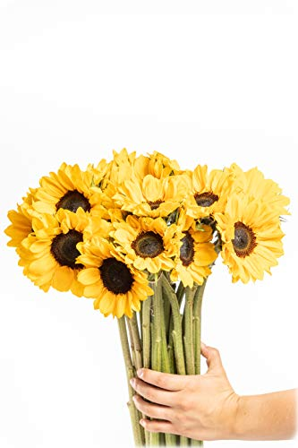Greenchoice Flowers - Fresh Cut Sunflowers, Flowers for Delivery Prime, Birthday Flowers , Sunflower Bouquet (15 Stems)