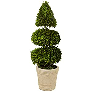 Preserved Boxwood with Double Ball and Cone 49