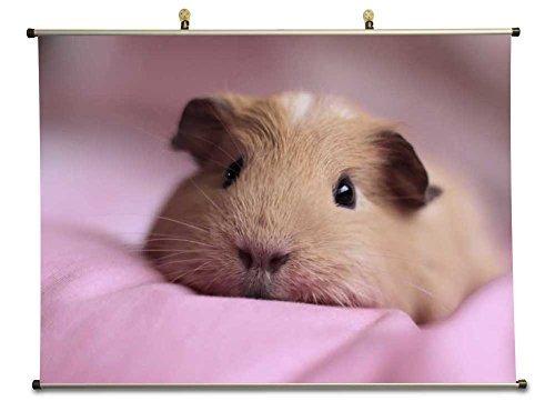 Cute Guinea Pig – キャンバス壁スクロールポスター( 32 x 24インチ) B073ZD92GN