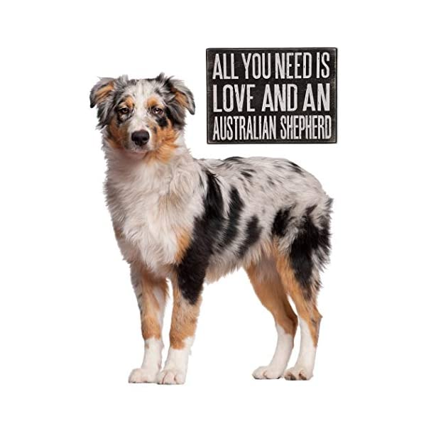 JennyGems All You Need is Love and an Australian Shepherd - Stand Up Wooden Box Sign - Australian Shepherd Home Decor - Aussie Sheperd Decorations and Accessories - Dog Artwork, Queensland, 5