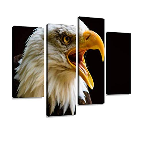 Canvas Wall Art Painting Pictures Captive Bald Eagle Portrait Taken at The Hawk Conservancy Trust Andover UK Modern Artwork Framed Posters for Living Room Ready to Hang Home Decor - Bald Portrait Eagle
