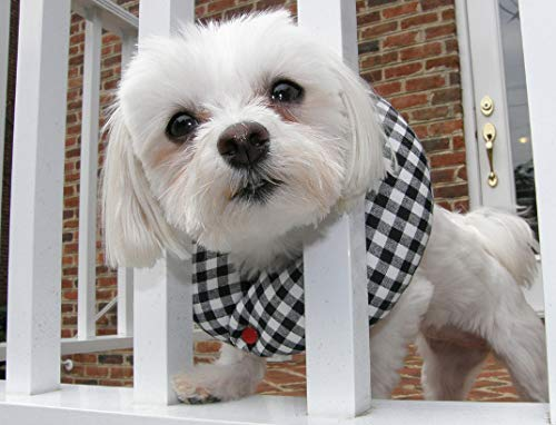 Puppy Bumpers Black and White Check up to 10