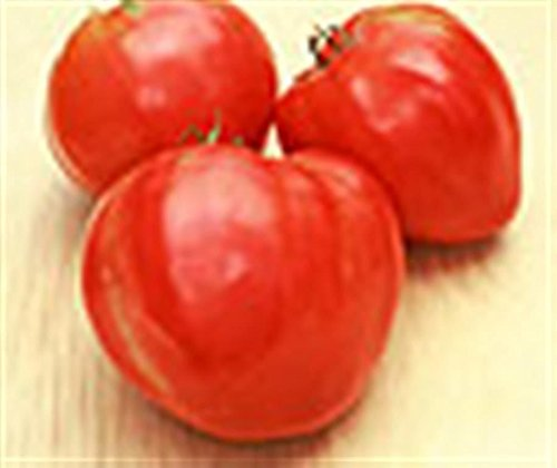 (Heritage heirloom beefheart FEW SEEDS tomato RIEF RED HEART Organic seed)