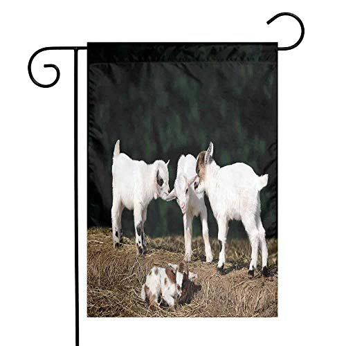 - Mannwarehouse Animal Garden Flag Cute Adorable Baby Sibling Goats Playing Eachother on a Solid Rock in a Farm Premium Material W12 x L18 White and Brown