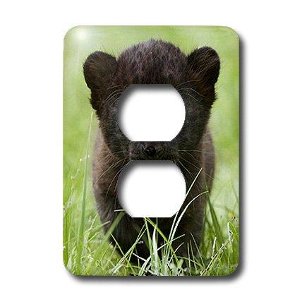 3dRose LLC lsp_4537_6 Black panther Cub 2 Plug Outlet (Panthers Photograph)