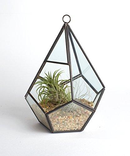 Shop Succulents Geometric Teardrop Terrarium with Air Plants