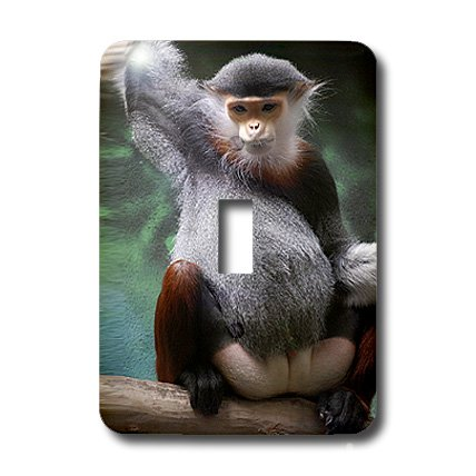 3dRose lsp_3880_1 Douc Langur Monkey Single Toggle Switch
