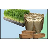Wheatgrass Growing Kit - Small
