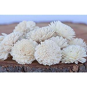 "Bloem, Inc. Zinnia Sola Flowers, 2"" Size, Set of 10 98"