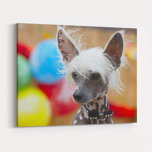 Chinese Crested Hairless Skin Care