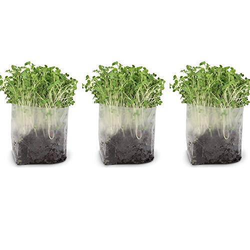 Pop Up Microgreens Kit (Kale) - Just Add Water and Seed. Perfect Size, a Quick, Smart, Nutritious Meal. Includes Fiber Soil in a Bag, Kale Seed. Super Health Benefits, Easy Grow/Delicious.