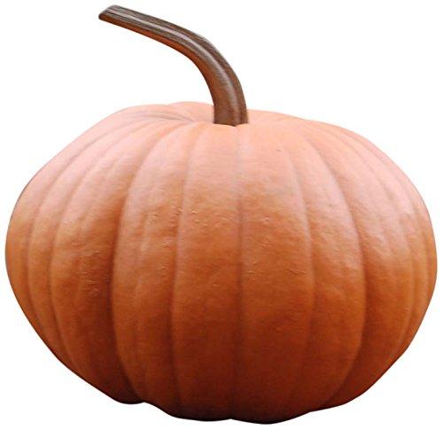 Hickory Manor House Long Stem Harvest Pumpkin for Home Decor ()
