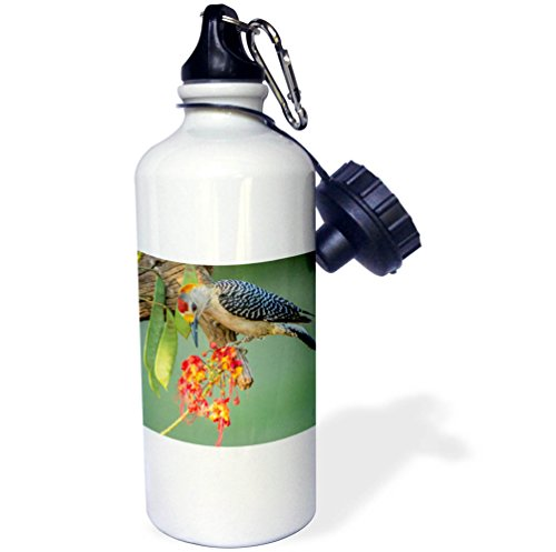 3dRose Danita Delimont - Birds - USA, Texas, Hidalgo County. Golden-fronted woodpecker eating flowers - 21 oz Sports Water Bottle (Hidalgo Flower)