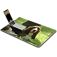 Luxlady 32GB USB Flash Drive 2.0 Memory Stick Credit Card Size Tricolor Basset Hound Limousine Dog IMAGE 20324099