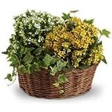 Fresh Flower & Plant Wreaths