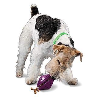 PetSafe Busy Buddy Twist 'n Treat Dispensing Dog Toy - Medium,Purple