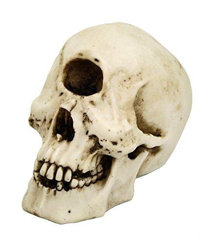 lops Skull Collectible Figurine Desktop Home Decor ()