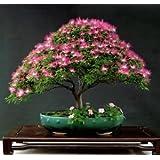 Creative Farmer Albizia Julibrissin Silk Plant Bonsai Suitable Seeds