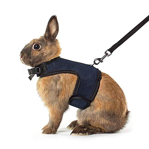 - Niteangel Adjustable Soft Harness with Elastic Leash for Rabbits (XL, Royal Blue)