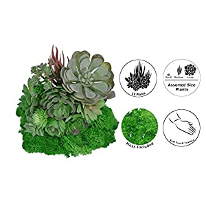 Fake Succulents Artificial Succulents Unpotted + Preserved Reindeer Moss, Mixed Fake Succulent Plants + Fake Moss for Floral Arrangement Home Decor Accent DIY Craft Picks Decoration 45