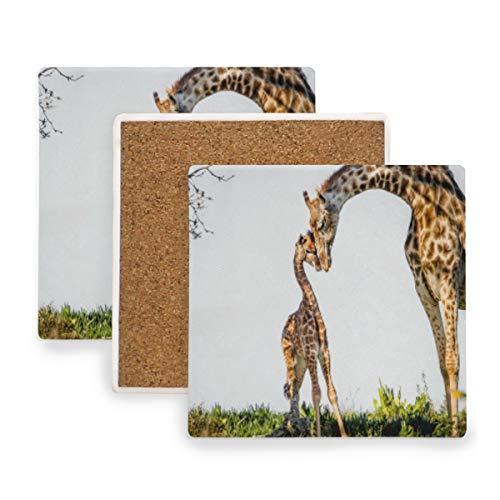 3D Giraffe South Africa Ceramic Coasters for Drinks,Square 4 Piece Coaster Set