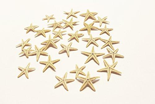 25 추가 작은 소형사-필리핀 탄 평 바다 STARS(1 | 4-1 | 2)비치 공예를 결혼식에 초대 해상 장식-플로리다 포탄과 선물