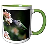 3dRose Stamp City - birds - Photo of female Ruby-throated Hummingbird enjoying some Abelia nectar. - 15oz Two-Tone Green Mug (mug_291292_12)