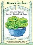 Container Lettuce Seeds Garden Babies Butterhead 1500 Seeds