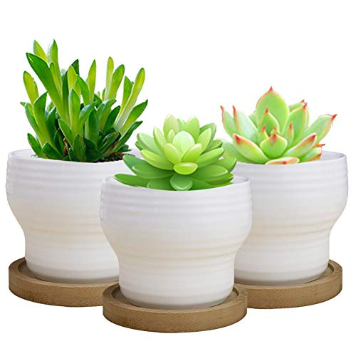 SQOWL 3 Piece 3.5 inch White Ceramic Succulent Planter for sale  Delivered anywhere in Canada