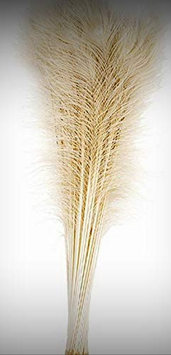 "1 Packet of 100 Pcs Bleached Peacock Tails Crafting Feathers 35-40"" (Party) - for DIY Craft Costumes Hats Pens Hair Accessories Trim Mask Wedding Home Party Decorations"