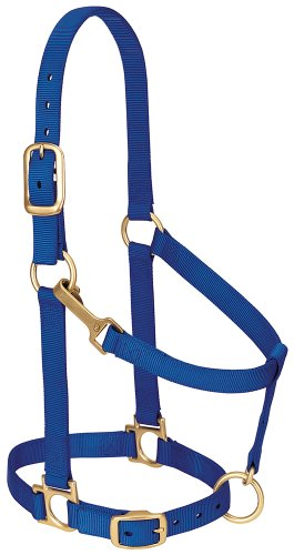 Blue Halter (Weaver Leather Basic Adjustable Nylon Halter, Blue, 1