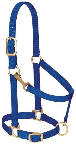 "Weaver Leather Basic Adjustable Nylon Halter, Blue, 1"" Average Horse"
