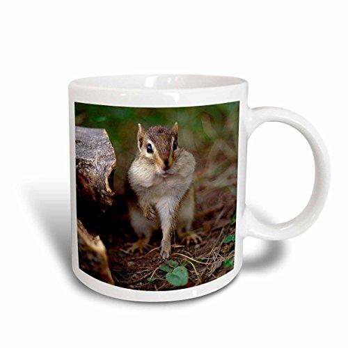 3dRose mug_91403_1 Minnesota, Itasca Sp, Eastern Chipmunk Wildlife Us24 Pha0028 Peter Hawkins Ceramic Mug, 11-Ounce