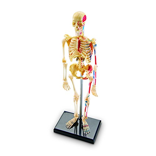 Learning Resources Skeleton