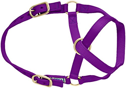 UPC 842688054766, Perri's Mini Nylon Cow Halter, Purple, Size 1