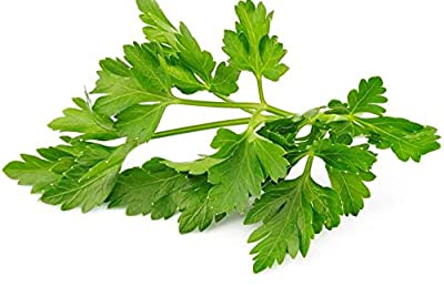 Seeds - Winter Chervil herb 6000 Seeds French Parsley Heirloom Garden Wholesale by TricaStore