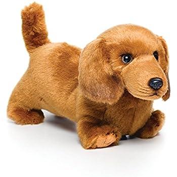 Amazon Com Nat And Jules Playful Small Dachshund Dog Children S