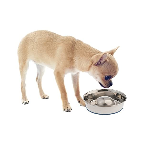OurPets DuraPet Slow Feed Premium Stainless Steel Dog Bowl 2