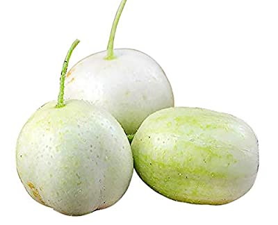30+ ORGANICALLY Grown Crystal Apple Cucumber Seeds, Heirloom Non-GMO, Rare, Sweet, Crisp and Juicy, from USA