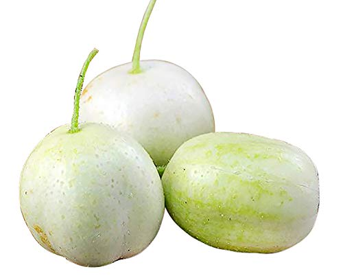 30+ ORGANICALLY Grown Crystal Apple Cucumber Seeds, Heirloom Non-GMO, Rare, Sweet, Crisp and Juicy, from USA (Apple Cucumber Seeds)