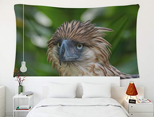 - Wall Tapestry,Eagle,Tapestry,Shorping 80x60 InchInches Hanging Wall Tapestry for Décor Living Room Dorm Philippine Eagle a critically endangered bird and one of the largest Birds of Prey endemic to th