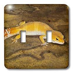 3dRose lsp_73100_2 Leopard Gecko Morph, Lizard, Pakistan-...