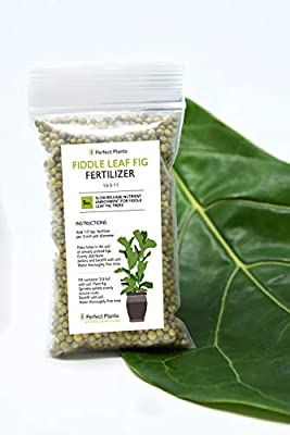 Fiddle Leaf Fig Slow-Release Fertilizer by Perfect Plants