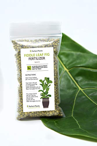 (Fiddle Leaf Fig Slow-Release Fertilizer by Perfect Plants - Apply Every 6 Months for Nutrient Enrichment - 5 Oz. Bag for Indoor and Outdoor Use on All Fig Tree Sizes)