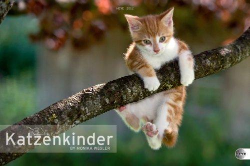Katzenkinder Posterkalender 2012