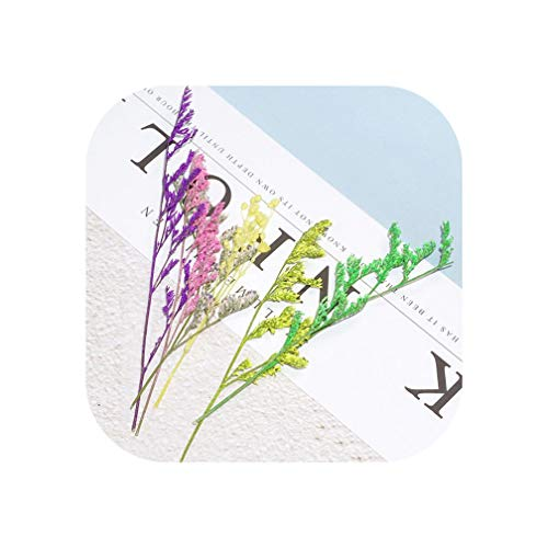 (Little-hope Artificial Flower Natural Dry Leaves Flowers Material Manual Book Mark Jewelry Pendant Art Craft Tool,2 )