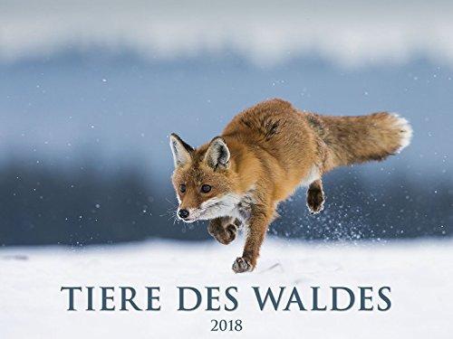 Tiere des Waldes 2018 - Bildkalender quer (56 x 42) - Tierkalender - Naturkalender